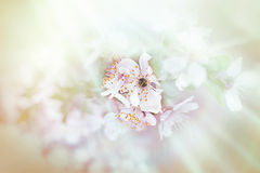 Soft focus on beautiful blossoming Royalty Free Stock Photos
