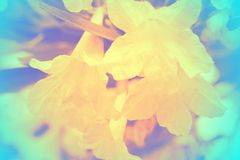 Soft focus of beautiful flowers with color filters Royalty Free Stock Images