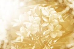 Soft focus of beautiful flowers on tree. Stock Photo