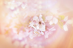 Soft focus on blooming - flowering Stock Photos