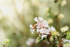 Soft focus and blurred flowers on pastel color. stock photo