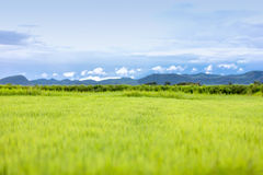 Soft focus and blurry of Green grass field and small hills on bl. Ue sky with clouds Stock Image