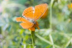 Soft focus Butterfly on flower. Butterfly on the green leaf. Abstract beautiful light from sunshine Stock Images