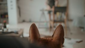 Skateboarder regrips board diy at workshop. Soft focus cinematic shot of tiny little brown dog puppy patiently sit and watch owner work in workshop or loft stock footage