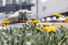 Soft Focus City Tram 2 Royalty Free Stock Photos