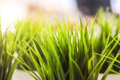 Close-up decorative green grass indoor royalty free stock photography