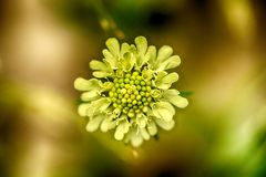 Soft-focus close-up of wildflowers Royalty Free Stock Photo