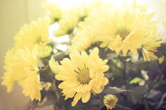 Soft-focus close-up of yellow flowers. Stock Photo