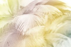 Soft focus fashion Color Trends Spring Summer fluffy feathers abstract texture background. Soft focus Color Trends fluffy feathers abstract texture background royalty free stock photos