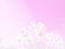 Soft focus cosmos flower on ping pastel background Stock Photos