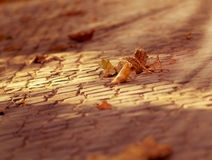 Soft focus on fallen leaves Royalty Free Stock Photography