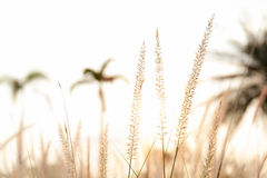 Soft focus of field and softly mission grass swaying in the wind Stock Images