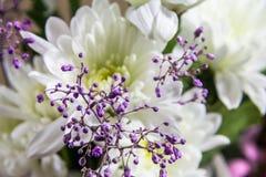 Soft Focus Flower Arrangement. A still Life of Soft Focus Flower Arrangement which could ideal for a Website Royalty Free Stock Photos