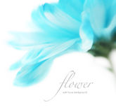 Soft focus flower background with copy space. Royalty Free Stock Image