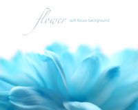 Soft focus flower background with copy space. Royalty Free Stock Images