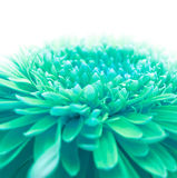 Soft focus flower background Royalty Free Stock Photos