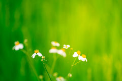 Soft focus flower with opened space for your design Stock Image