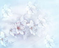 Soft focus on flowering branch - beautiful nature Stock Images
