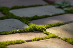 Soft focus garden path of rectangular stones of yellow, red and gray colors. Bright green moss grows between the stones royalty free stock image