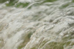 Soft Focus of Grass Royalty Free Stock Images