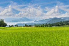 Green paddy rice field with beautiful sky and cloud, Thailand fuji mountain similar to Japan`s Fuji mountain in Thailand. The soft focus green paddy rice field stock photos