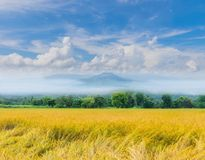 Green paddy rice field with beautiful sky and cloud, Thailand fuji mountain similar to Japan`s Fuji mountain in. The soft focus green paddy rice field with royalty free stock photography