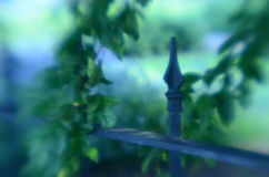Soft focus leafy tree branches wrought iron fence gate Royalty Free Stock Images