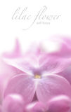 Soft focus lilac flower background with copy space. Made with lens-baby and macro-lens Stock Images