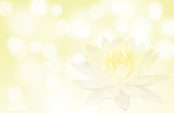 Soft focus lotus or water lily flower on yellow color abstract background Royalty Free Stock Images