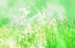 Soft focus meadow field  with green light bokeh   background. Grass flower soft focus spring,summer  fresh nature  peacful and relax outdoor  photo   background Stock Photography