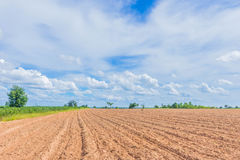 The soft focus the plowing,tillage, picking, tillage, planting, cultivation,for agriculture area,the  cassava, tapioca plant field. With the beautiful sky and Royalty Free Stock Photo