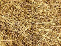 Soft Focus of Rice Straw Stock Photos