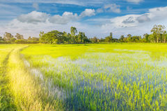 The soft focus of the road,green paddy rice field with the beautiful sky and cloud in the afternoon Thailand, the beam, light, an. The soft focus of the road Royalty Free Stock Images
