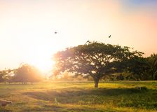 Sunset time on the mountain with big tree and birds stock image