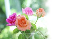 Soft focus spring roses, purple and old rose flowers with green. Leaves in glass vase on blurred bokeh background with white copy space Stock Photo