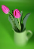 Soft Focus Tulips Royalty Free Stock Photo