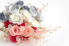 Soft focus,Vintage Rose flower. On white background Stock Photography