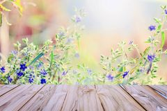 Soft focus violete flower wild background with wood table for de. Sign Stock Photography