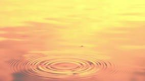 Soft focus water drop, sunset light effects
