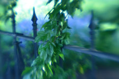 Soft focus wrought iron fence leafy hanging tree branches Stock Image