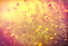 Soft focus on yellow flowers Royalty Free Stock Photo