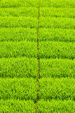 Soft and fresh grass square Stock Image