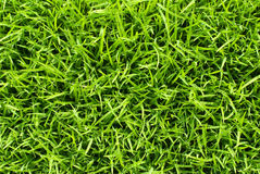 Soft and fresh grass square Royalty Free Stock Images