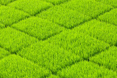 Soft and fresh grass square Stock Photo