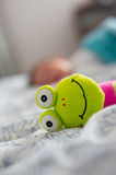 Soft frog toy Stock Images