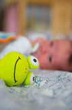 Soft frog toy Royalty Free Stock Photo
