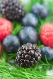 Soft fruit Stock Photo