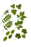 Soft Fruit Leaves Stock Photo