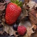 Soft Fruits Stock Image