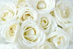 Soft full blown white roses Stock Photos